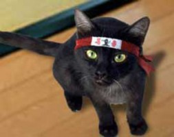 ninja-cat1