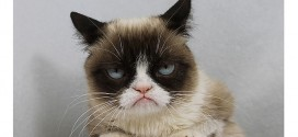 Grumpy Cat to appear on Raw tonight