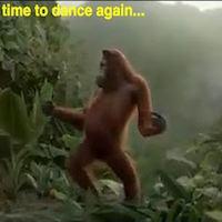 dancing monkey_thumbnail